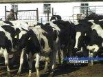 Животноводам Ростовской области помогут приобрести молоковозы и скотовозы