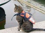 Кошка провела 35 дней без воды и пищи на борту корабля