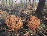 Когда растут грибы. Зима.