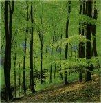 Где растут грибы. Лиственничные леса.