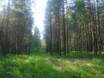 Где растут грибы. Смешанные леса.