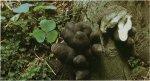 Гриб Ксилярия полиморфная, ксилярия многообразная. Классификация гриба. (фото)