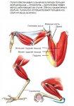 В мире птиц. Как работают крылья и ноги птиц?