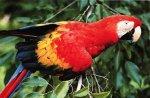 Почему птицы линяют?