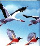 Почему птицы могут летать?