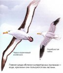 Как быстро, далеко и высоко летают птицы?