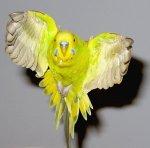 За счет чего у птиц работают мышцы?