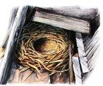 Как и зачем птицы вьют гнезда?
