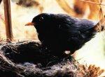 Как птицы кормят птенцов?