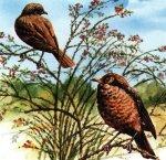 Куда улетают птицы осенью?