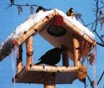 Как регулируется численность птиц зимой?