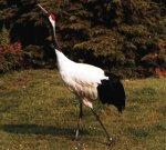 Сколько птиц живет на земле?