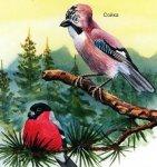 Птицы умеренных широт.