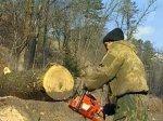 Финляндия поставила лес на пути России в ВТО