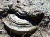 Четыре мины времен Великой Отечественной войны обнаружены в одном из хуторов Ростовской области