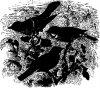 Древесные птицы (Coracornithes). Славки.
