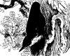Древесные птицы (Coracornithes). Виды синиц.