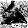 Древесные птицы (Coracornithes). Жаворонки (Alaudidae).