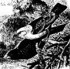Древесные птицы (Coracornithes). Виды ткачей.