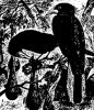 Древесные птицы (Coracornithes). Виды скворцов.