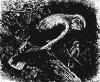 Древесные птицы (Coracornithes). Иволги.