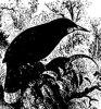 Семейство райских птиц (Paradiseidae)