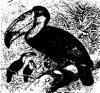 Семейство перцеядов или туканов (Rhamphastidae).