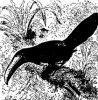Семейство перцеядов или туканов (Rhamphastidae). Виды.