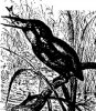 Семейство зимородковых (Alcedinidae)