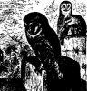 Совы (Strigidae)