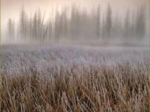 National Wildlife опубликовал самые красивые фотографии флоры и фауны 2005 года