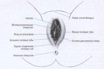 sperma-video-s-krasivimi-devushkami