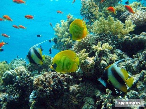 Зоопланктон это сообщество мелких и