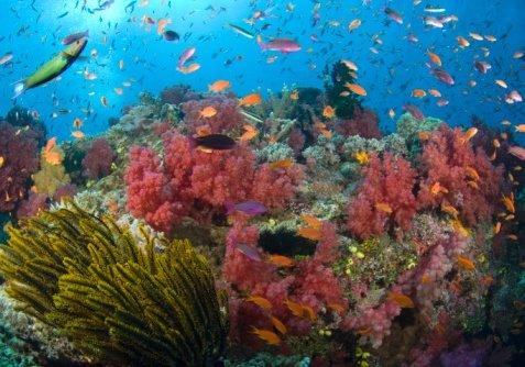 Флора и фауна тихого океана