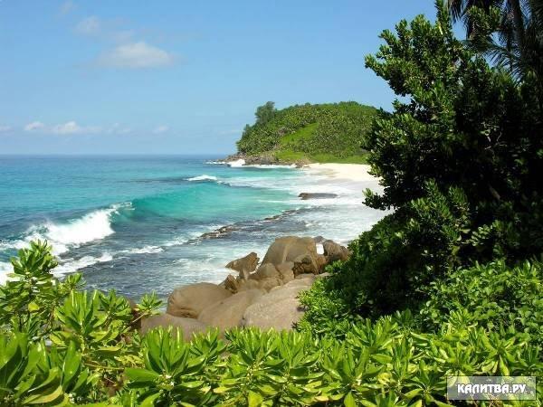 И животный мир индийского океана