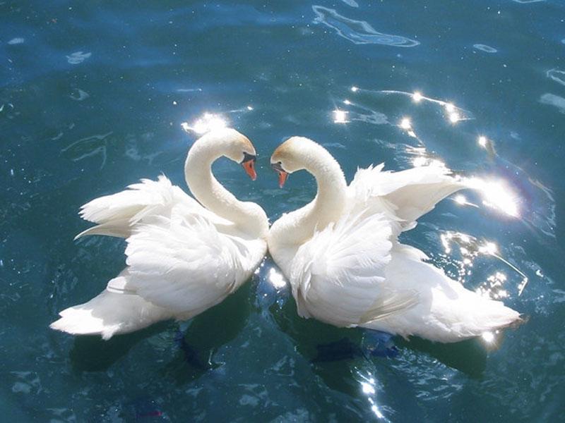 Несколько способов привлечения любви