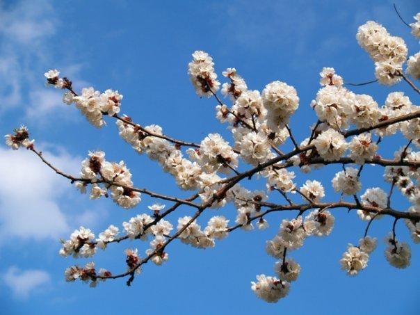 аккорды вопли видоплясова - весна: